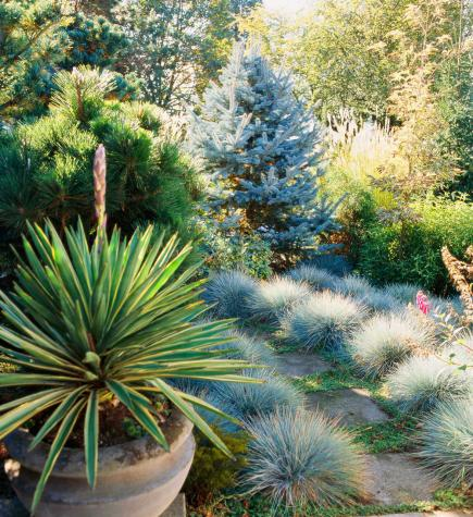 Ornamental Grasses Colorado How to use ornamental grasses in midwest gardens midwest living workwithnaturefo