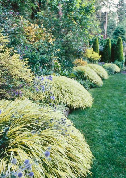 Best ornamental grasses for midwest gardens midwest living for Japanese mounding grass