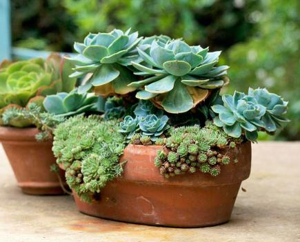 Container gardens for the midwest midwest living for Easy care plants for pots
