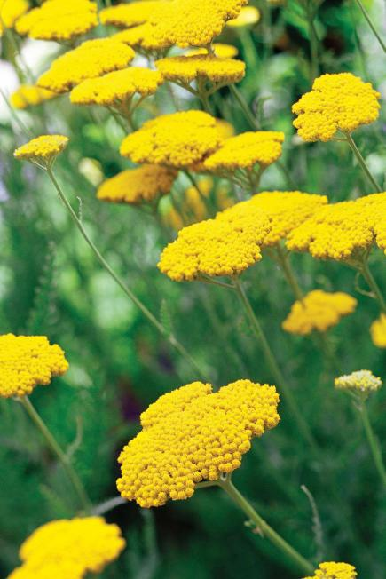 - 25 Top Easy-Care Plants For Midwest Gardens Midwest Living
