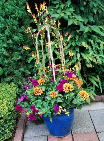 vines so fine vines can give your container garden - Flower Garden Ideas In Pots
