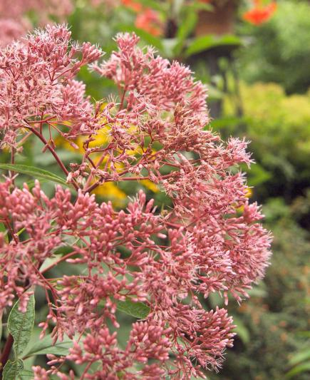 6 Easy Care Midwest Native Plants