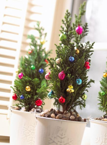 live miniature christmas trees with decorations