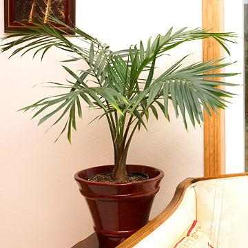 20 Super Easy Houseplants Youll Love Midwest Living