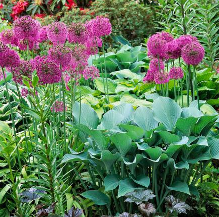 10 Top Summer Plant Pairs Midwest Living