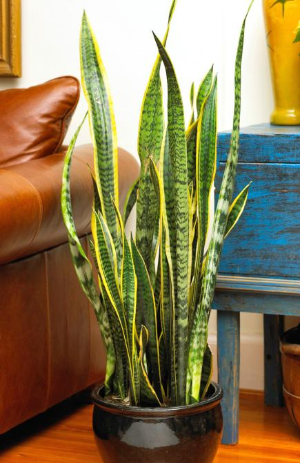 20 super easy houseplants you 39 ll love midwest living Tall narrow indoor plants