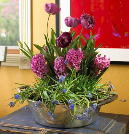4 Ideas for Stylish Indoor Plant Displays | Midwest Living