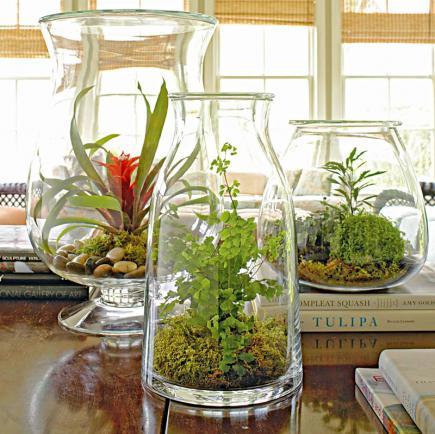 plant a beautiful terrarium midwest living. Black Bedroom Furniture Sets. Home Design Ideas