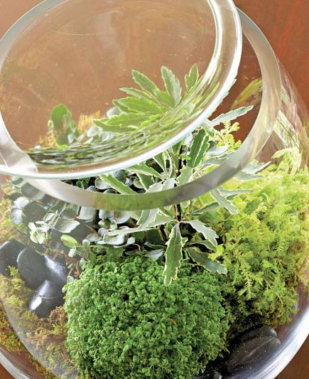 Plant A Beautiful Terrarium