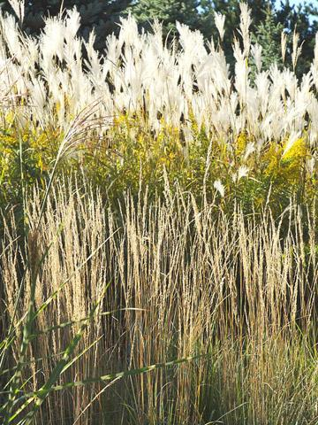 Perfect partners for ornamental grasses midwest living for Common ornamental grasses