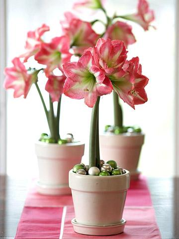 How To Grow Indoor Blooms And Bulbs Midwest Living