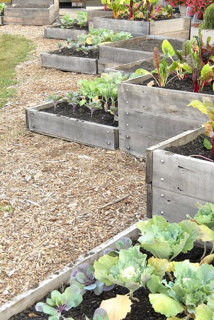 Design Decisions. A Raised Garden ...