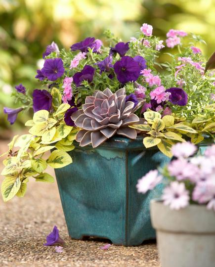 Container Garden Ideas container gardens Splashes Of Color