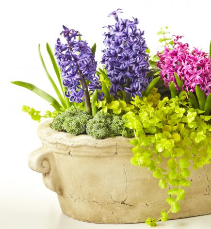 petite presence - Flower Garden Ideas In Pots