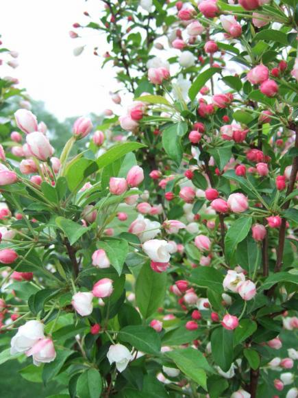 20 Tough Trees For Midwest Lawns Midwest Living