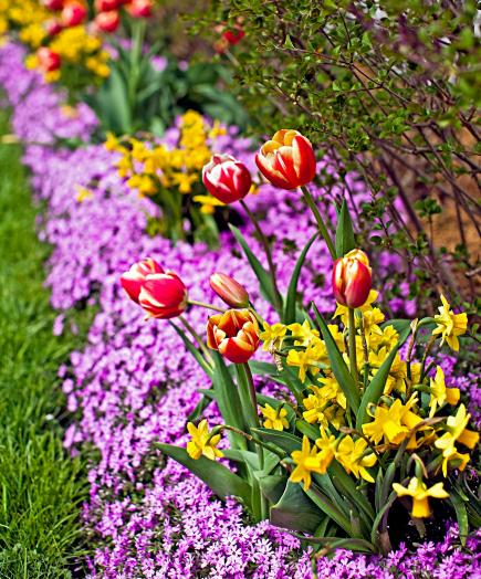 Tulip Tips From Chicago Gardeners Midwest Living
