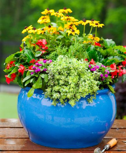 How To Plant A Cottage Garden In A Pot