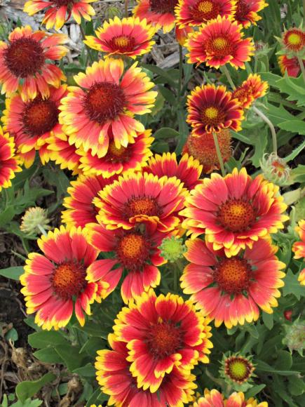 25 top easycare plants for midwest gardens - Plants That Grow Well In Shade
