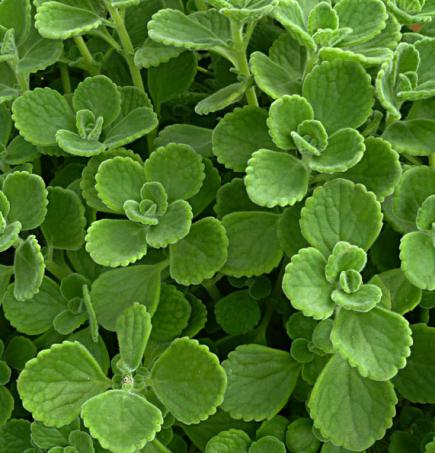 Easy Herbs to Grow at Home Midwest Living