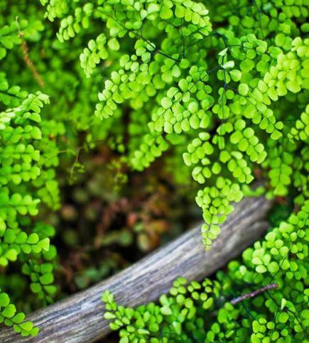 Tour An Illinois Woodland Garden – Woodland Garden Plants