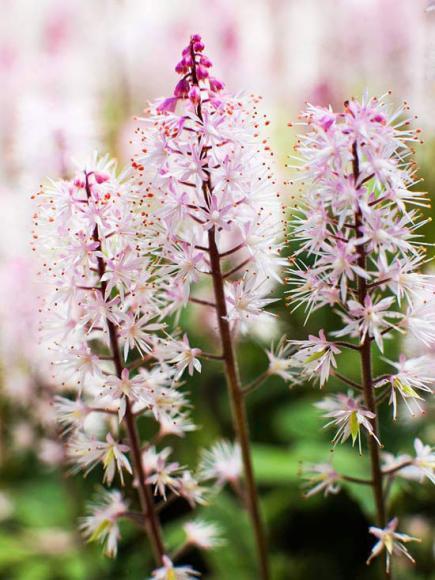 Flower Garden Ideas Illinois tour an illinois woodland garden | midwest living