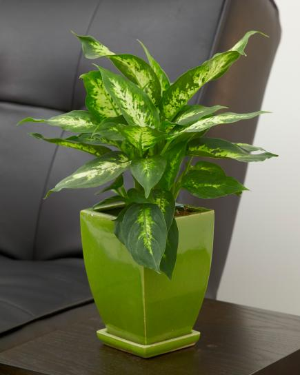 20 Super-Easy Houseplants You'll | Midwest Living on fake plants in vases, aquatic plants in vases, house plants in containers, water plants in vases, house plants in kitchen, growing plants in vases, green plants in vases, tropical plants in vases,