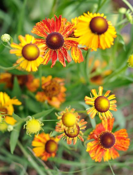 25 Top EasyCare Plants for Midwest Gardens Midwest Living