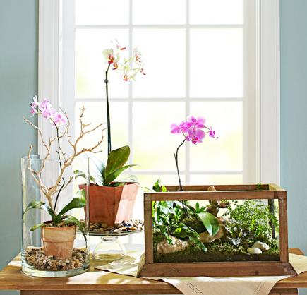 4 Ideas For Stylish Indoor Plant Displays Midwest Living