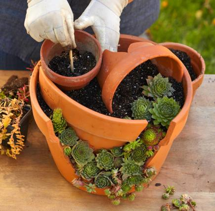 How to Plant a Cracked-Pot Succulent Garden | Midwest Living