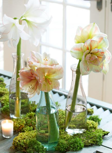 Nature inspired christmas decorations midwest living for Amaryllis christmas decoration