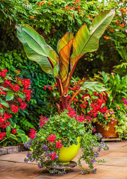Pics for flower pot ideas for full sun for Flower garden designs for full sun