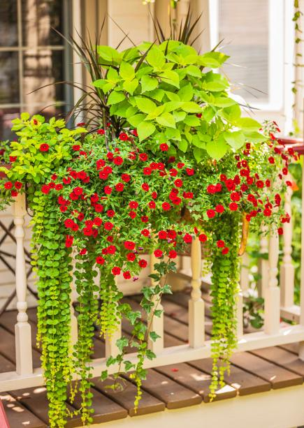 35 beautiful container gardens midwest living - Best flower combinations for containers ...