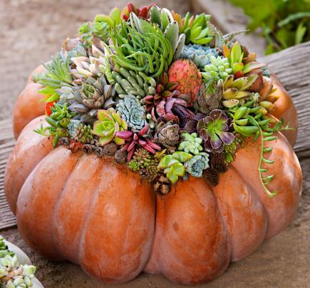 Create your own succulent pumpkin