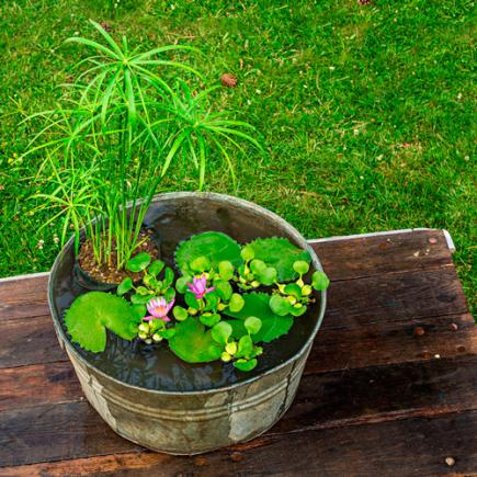 DIY water container garden