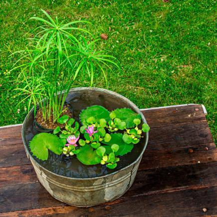15 Spring DIY Garden Ideas | Midwest Living