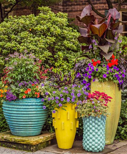 Container Garden Grouping