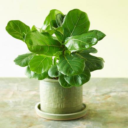 5 Hard To Kill Indoor Plants Midwest Living