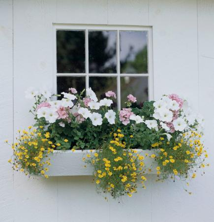 30 Bright And Beautiful Window Box Planters Midwest Living