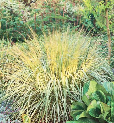 Best ornamental grasses for midwest gardens midwest living for Ornamental grass with yellow flowers