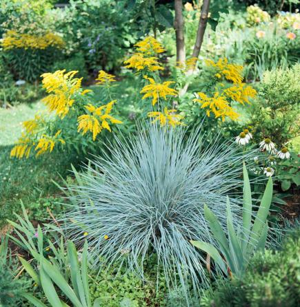 Best ornamental grasses for midwest gardens midwest living for Blue grasses for the garden