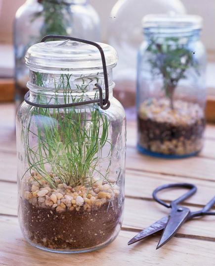 Beautiful Windowsill Herbs