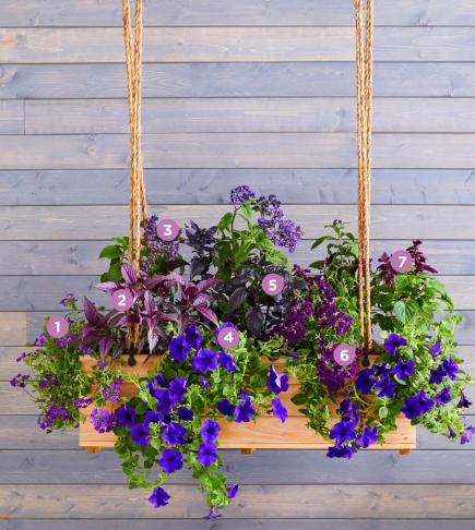 Purple state window box