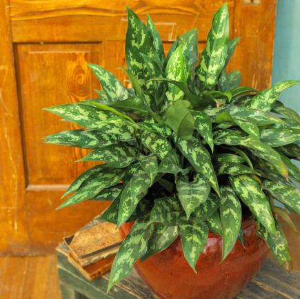 20 super easy houseplants you 39 ll love midwest living for Easy to grow indoor plants