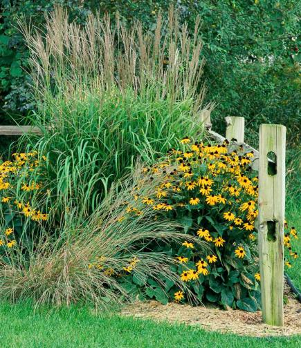 How to use ornamental grasses in midwest gardens midwest for Designing gardens with grasses