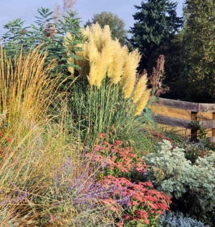 Best ornamental grasses for midwest gardens midwest living for Long grass landscaping