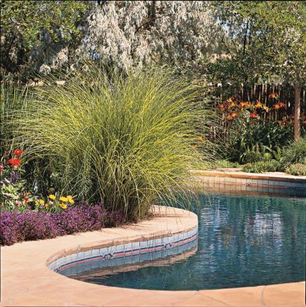 How to Use Ornamental Grasses in Midwest Gardens | Midwest ...