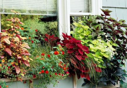 30 Bright and Beautiful Window Box Planters | Midwest Living