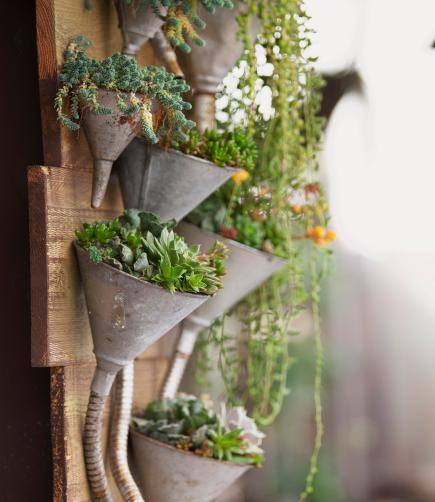 planted funnels