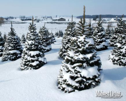 Decorate Your Desktop With Our Christmas Photos Midwest