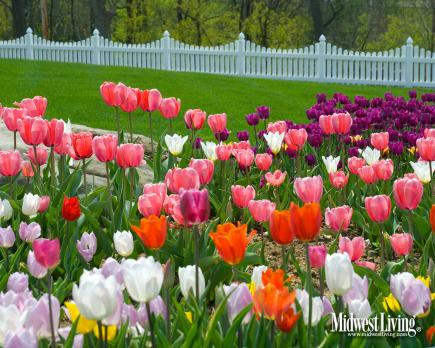 Decorate Your Desktop With Our Flower Photos Midwest Living
